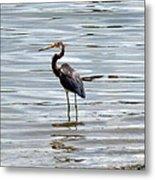 Wading Heron Metal Print