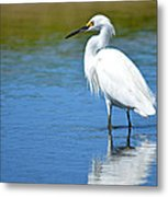 Wading In Silence Metal Print