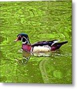 Water Wood Duck Metal Print