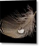 Wet Feather Metal Print