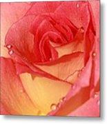 Wet Rose Metal Print