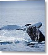 Whales Fluke Metal Print