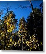 What's Left Of The Autumn Leaves Metal Print
