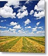 Wheat Farm Field At Harvest In Saskatchewan Metal Print by Elena Elisseeva