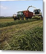 Wheat Harvest For Silage Metal Print