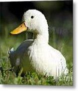 White Duck Metal Print