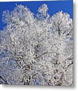 White Frost Tree  Metal Print