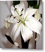 White Lily In Macro Metal Print