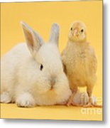 White Rabbit And Bantam Chick On Yellow Metal Print
