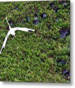White-tailed Tropicbird Metal Print