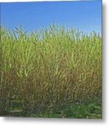 Willow Bioenergy Crop, Sweden Metal Print