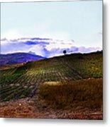 Wine Vineyard In Sicily Metal Print