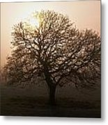 Winter Tree On A Frosty Morning, County Metal Print