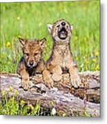 Wolf Cubs On Log Metal Print