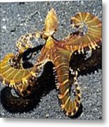 Wonderpus Octopus Metal Print