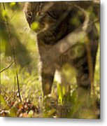 Wonky Eyed Tiger Metal Print