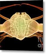 X-ray Of Deep Water Crab Metal Print