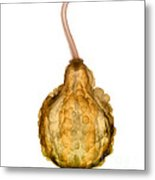 X-ray Of Fall Decorative Gourd Metal Print