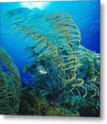 Yellow Snapper Fish Metal Print