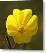 Yellow Wild Flower Metal Print