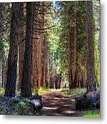 Yosemite Trail Metal Print
