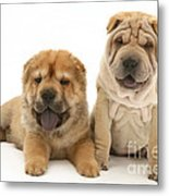 Young Dogs Metal Print