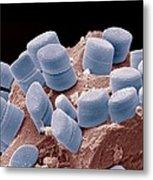 Diatoms, Sem Metal Print by Steve Gschmeissner