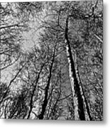 Epping Forest Trees Metal Print