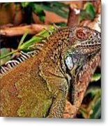 Iguana Lizard Metal Print
