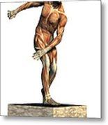Male Musculature Metal Print