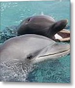 Atlantic Bottlenose Dolphins Metal Print