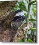 Brown-throated Three-toed Sloth Metal Print by Suzi Eszterhas