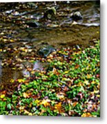 Fall Along Williams River Metal Print by Thomas R Fletcher