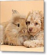 Puppy And Rabbit Metal Print
