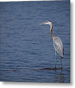 1206-9280 Great Blue Heron 1 Metal Print