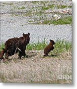 Black Bear Family Metal Print