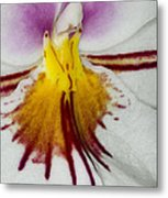 Exotic Orchid Flowers Of C Ribet Metal Print by C Ribet