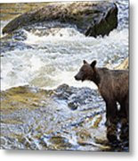 Grizzly Bear Ursus Arctos Horribilis Metal Print