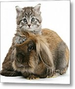 Kitten And Rabbit Metal Print
