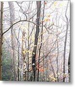 Autumn Monongahela National Forest Metal Print