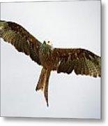 Red Kite In Flight Metal Print