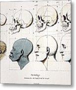 1760a Petrus Camper Facial Angle Eugenics Metal Print
