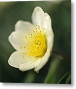 A Close View Of A Wildflower In Yoho Metal Print