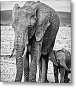 African Elephants In The Masai Mara Metal Print