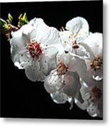 Apricot Flowers At Night Metal Print