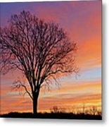 Bare Trees At Dawn Metal Print