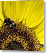 Bee And Sunflower Metal Print