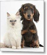 Blue-point Kitten & Dachshund Metal Print