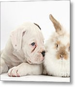 Boxer Puppy And Young Fluffy Rabbit Metal Print