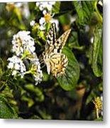 Butterfly On Blooming Flowers Metal Print